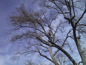 Black Oak (Crown Cleaning)