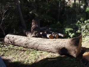 Fir (Logs for Milling)