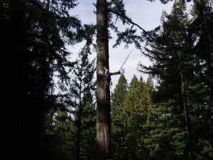 Hazardous Fir Removal