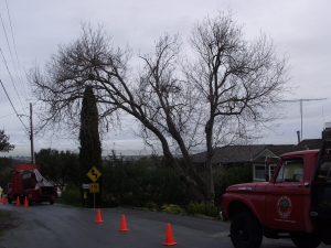 Box Elder Removal