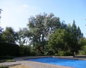 Eucalyptus (after)