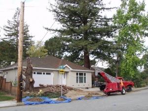 Incense Cedar Removal (San Carlos, Ca.)
