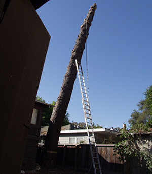 Woodside CA Tree Removal Service