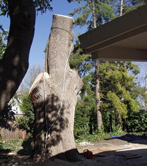 Woodside CA Tree Removal Company