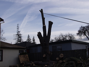 Woodside CA Tree Removal