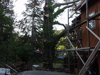 Menlo Park Tree Thinning Service