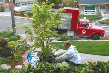 Redwood City CA Tree Thinning Service