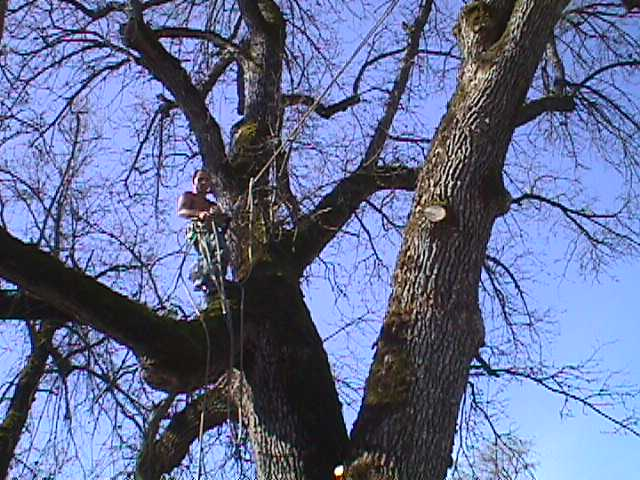 Tree Cabling & Bracing Emerald Hills CA - Redwood City Tree Service - Neck of the Woods - MVC-008S