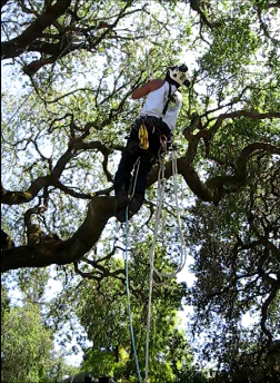 Tree Preservation Emerald Hills CA - Redwood City Tree Permits, Maintenance - Neck of the Woods - SRT