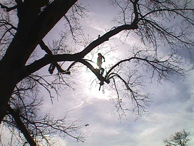 Tree Pruning Emerald Hills CA - Redwood City Tree Trimming - Neck of the Woods Tree Service - MVC-012S